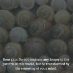 Bible Verse Favs