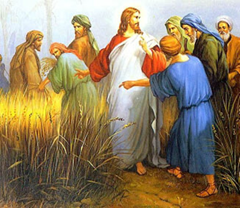 Pharisees question Jesus when disciples pick grain on the Sabbath - artist unknown
