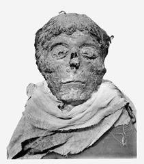 Mummified head of Pharaoh Ahmose I - a potential candidate for the Pharaoh mentioned in Exodus