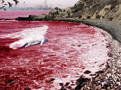 The second bowl of Revelation turns seas into blood - artist unknown